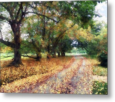 Along The Path Under The Trees Metal Print by Susan Savad