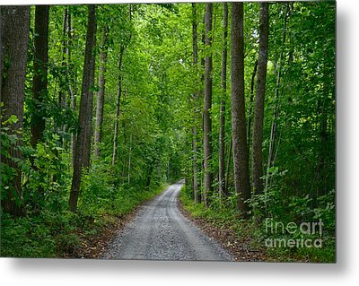 The Road To Thomas Jefferson's House Metal Print