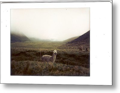 Alpaca Metal Print by photography by Pamela Abad