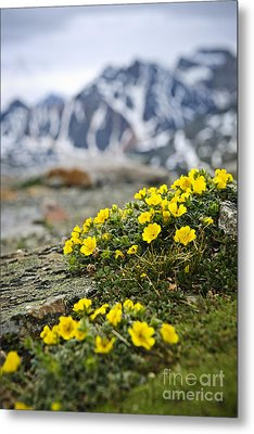 Alpine Meadow  Metal Print by Elena Elisseeva