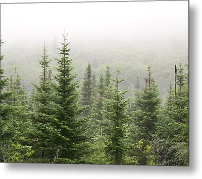 Metal Print featuring the photograph Alpine Trees by Robin Regan