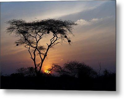 Amboseli Sunrise Metal Print by Marion McCristall