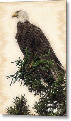 American Bald Eagle In Tree Metal Print by Dan Friend