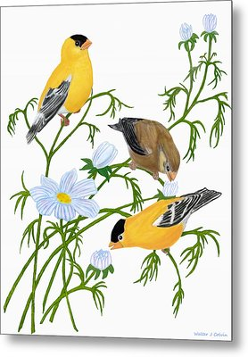 Metal Print featuring the digital art American Goldfinch by Walter Colvin