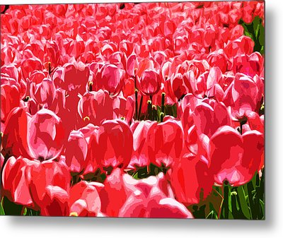 Amsterdam Tulips Metal Print by Phill Petrovic