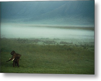 An African Elephant In The Ngorongoro Metal Print by Chris Johns