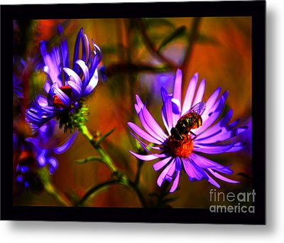 An Afternoon Bee In The Asters Metal Print by Susanne Still
