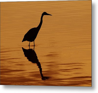 An Early Morning Dip Metal Print by Tony Beck