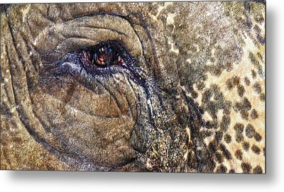 Metal Print featuring the photograph An Elephants Tear by Kelly Reber