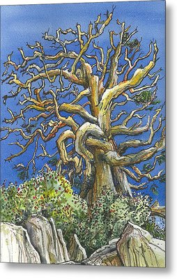 Metal Print featuring the painting An Old Bristol Pine by Terry Banderas