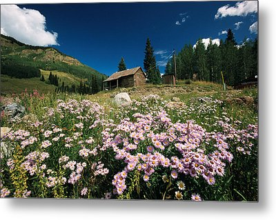 An Old Miners Cabin With Purple Asters Metal Print by Richard Nowitz