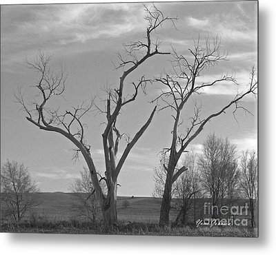 Metal Print featuring the photograph An Old Trees by Yumi Johnson