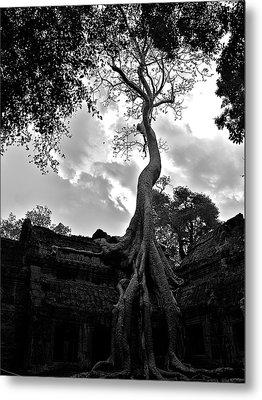 Ancient Tree Metal Print by Arj Munoz