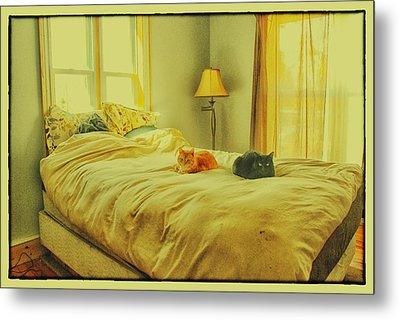 Metal Print featuring the photograph Andi's Cats by Kimberleigh Ladd