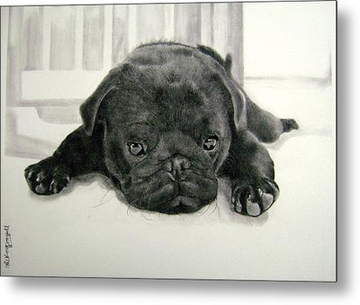 Andy's Puppy Metal Print