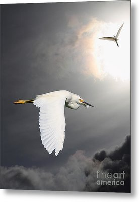 Angels Of The Night Sky Metal Print by Wingsdomain Art and Photography
