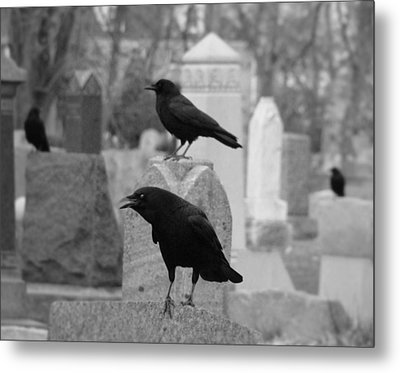 Angry Crow Metal Print by Gothicrow Images