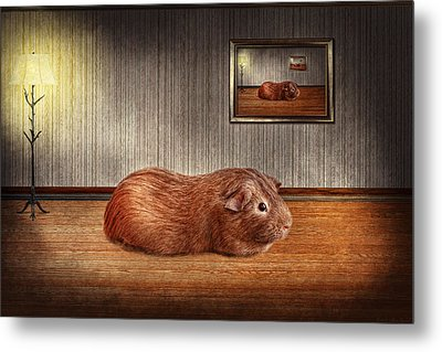 Animal - The Guinea Pig Metal Print by Mike Savad