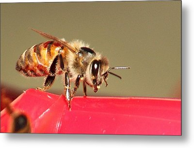 Another Bee Metal Print