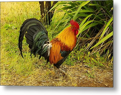 Another Rooster Metal Print by John  Greaves