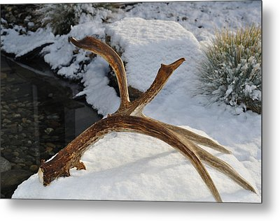 Antler 2 Metal Print by Heather L Wright