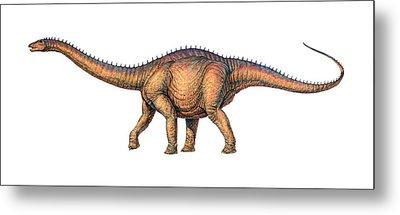 Apatosaurus Dinosaur Metal Print by Joe Tucciarone