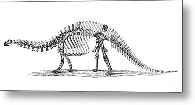 Apatosaurus Excelsus,  Aka Brontosaurus Metal Print by Science Source