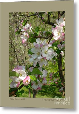Apple Blossoms-ix Metal Print by Patricia Overmoyer