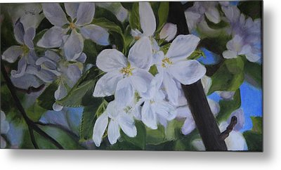 Apple Blossoms Metal Print by Tammy  Taylor