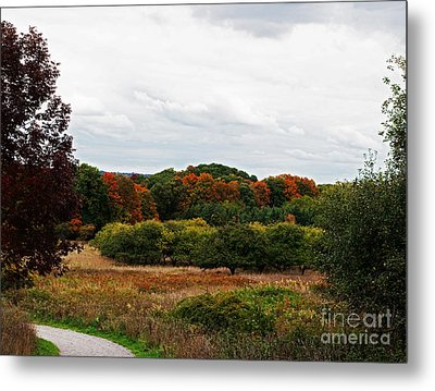 Apple Orchard Gone Wild Metal Print by Barbara McMahon