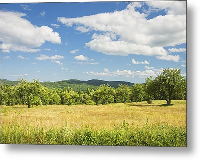 Apple Trees And Hay Field In Summer Maine Metal Print by Keith Webber Jr