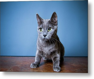 Apprehension Metal Print