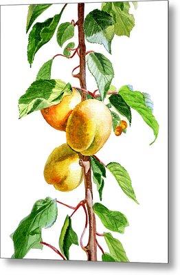 Apricots Metal Print by Irina Sztukowski