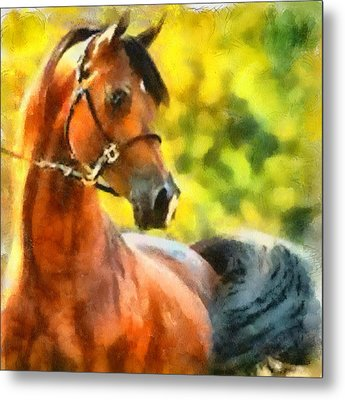 Metal Print featuring the painting Arabian Stallion by Elizabeth Coats