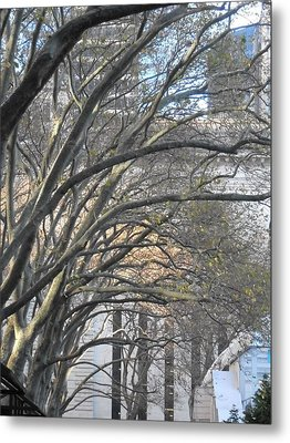 Arched Trees Metal Print by Kimberly Perry