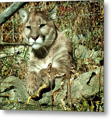 Are You Looking At Me Metal Print by Margaret Buchanan