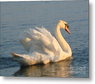 Metal Print featuring the photograph Are You Looking... by Katy Mei
