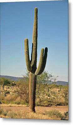 Metal Print featuring the photograph Arizona Cactus by Helen Haw