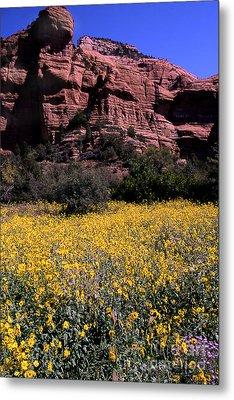 Arizona Flower Field Metal Print by Barry Shaffer