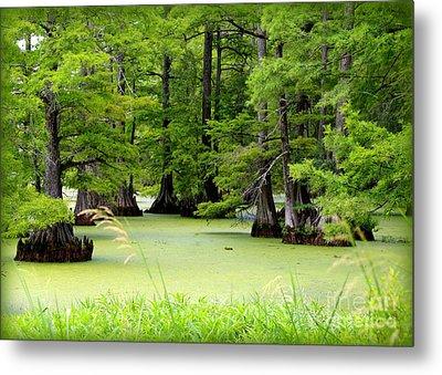 Arkansas Lake With Cypresses Metal Print by Carol Groenen