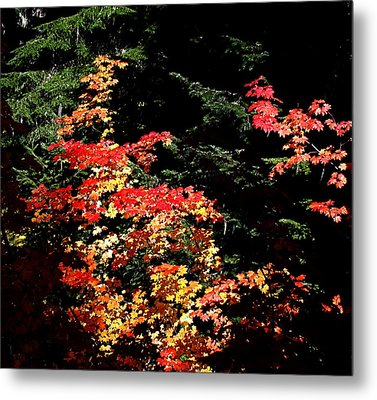 Arrival Of Autumn Metal Print by Nick Kloepping