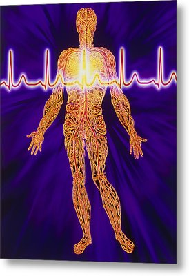 Artwork Of Human Venous System And Ecg Heart Trace Metal Print by Mehau Kulyk
