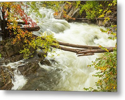 As The River Flows Metal Print by Karol Livote