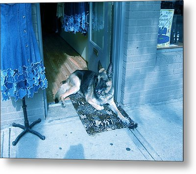 Metal Print featuring the photograph Asheville Dog by Victoria Lakes