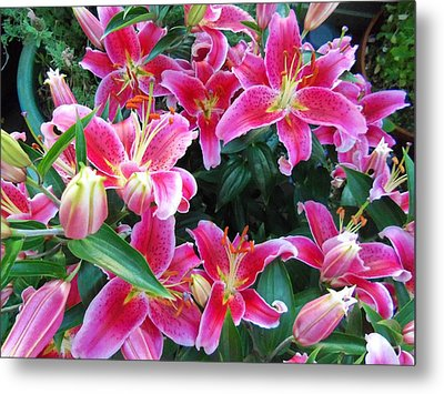 Asiatic Lillies Metal Print by Randall Weidner