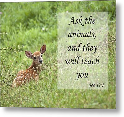 Metal Print featuring the photograph Ask The Animals by Jeannette Hunt