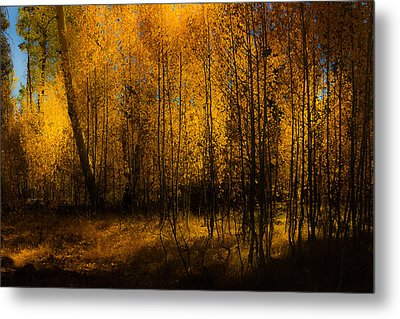 Metal Print featuring the photograph Aspen Glow by Randy Wood