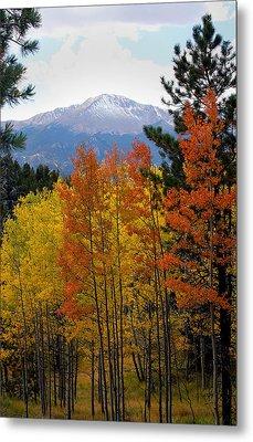 Aspen Grove And Pikes Peak Metal Print by Kimberlee Fiedler