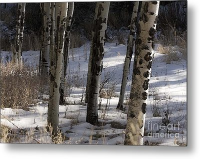 Metal Print featuring the photograph Aspen Grove by Angelique Olin