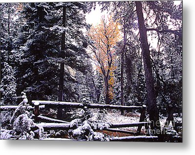 Aspen In Snow Metal Print by Barry Shaffer
